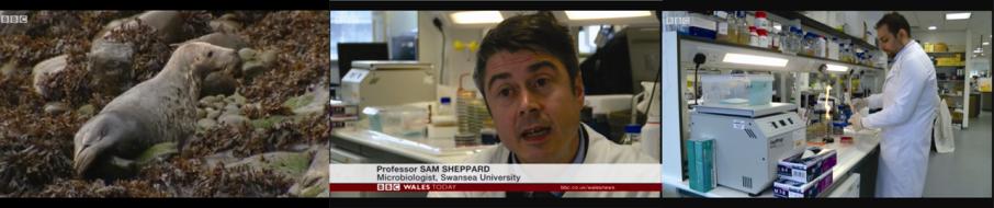 BBC_seals