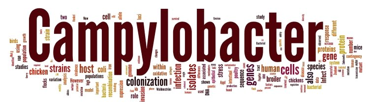 wordle_Campybook